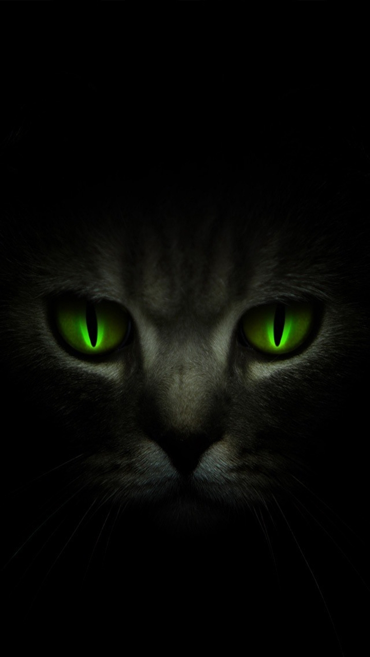 Wallpapers: Dark Cat Android Wallpapers: http://androidwallpapercentral.com/android/download/android-720x1280-wallpapers/animals/dark-cat.aspx