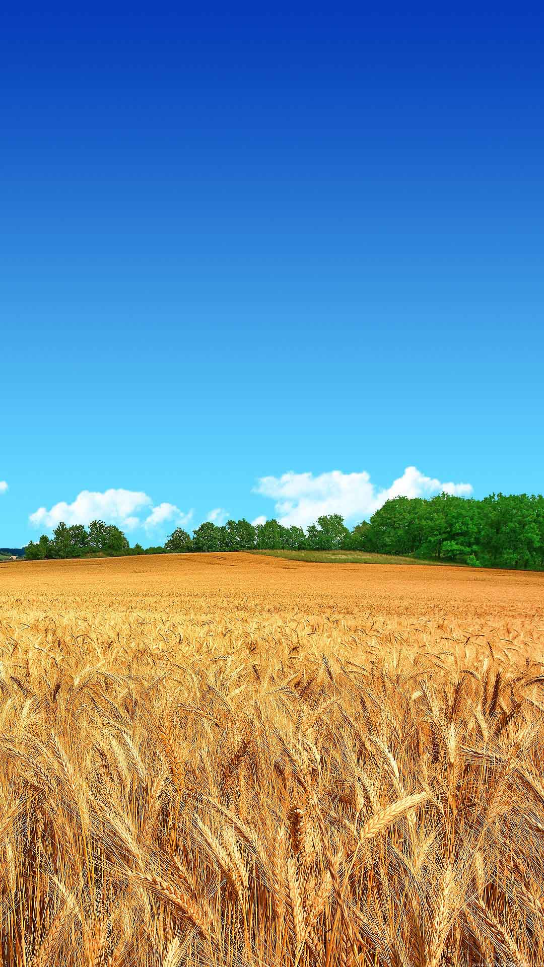 Samsung Galaxy J7 Wallpapers: Farmer Fields Android